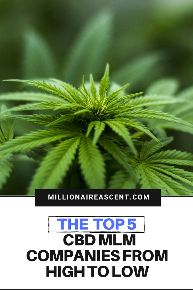 The Top 5 CBD MLM Companies from High to Low ⋆ Millionaire